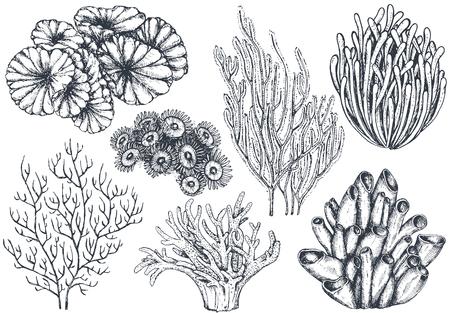 手のベクトル コレクション海洋植物やサンゴ礁の要素の描画