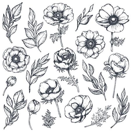 Vector collection of hand drawn anemone flowers Ilustração Vetorial