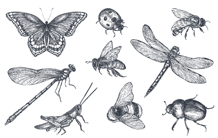 Insects sketch decorative set in sketch style
