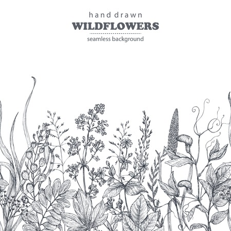 Vector seamless pattern with hand drawn herbs and wildflowers
