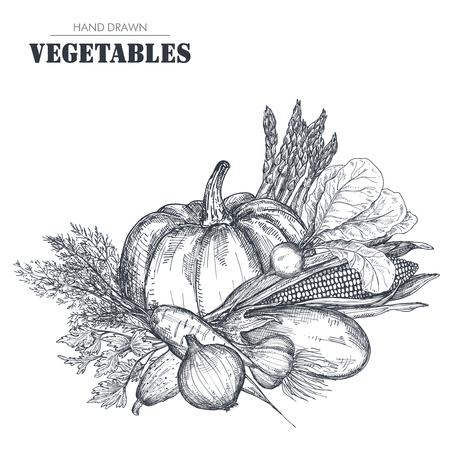 Vector illustration of hand drawn vector farm vegetables in sketch style. Illustration