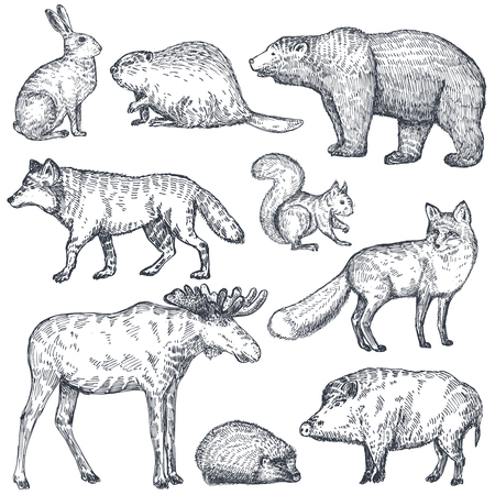 Vector set of hand drawn animals of Europe. Wolf, hedgehog, fox, bear, rabbit, squirrel, boar, moose, beaver isolated on white background. Black and white illustration in sketch style. 矢量图像