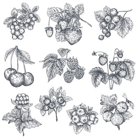 Vektorsammlung von Hand gezeichneten skizzierten Beeren lokalisiert auf weißem Hintergrund.