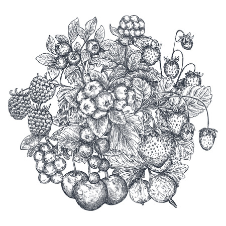 Vector illustration of hand drawn vector berries.
