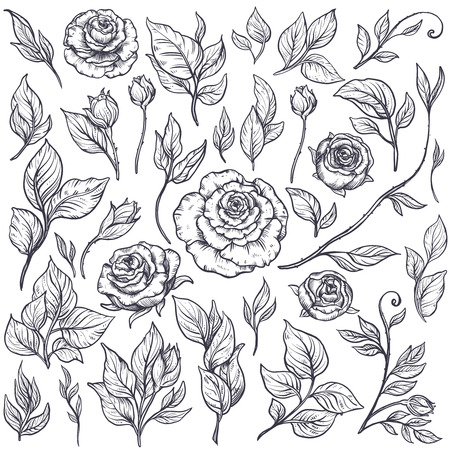 Set of roses and leaves, hand drawn vector illustration in graphic vintage style