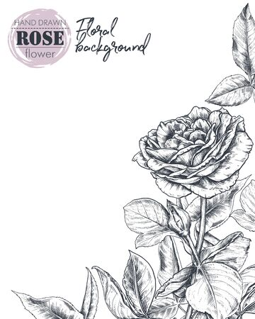 Vector template for greeting card or invitation with hand drawn rose flowers
