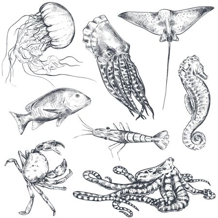 Vector collection of hand drawn ocean and sea animals in sketch style isolated on white.  イラスト・ベクター素材