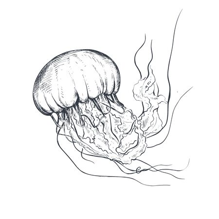 Vector hand drawn jellyfish in sketch style isolated on white.  イラスト・ベクター素材