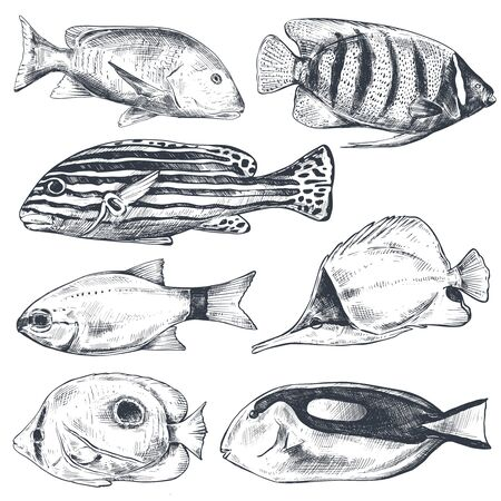 Vector collection of hand drawn exotic fishes in sketch style isolated on white. Monochrome graphic set.  イラスト・ベクター素材