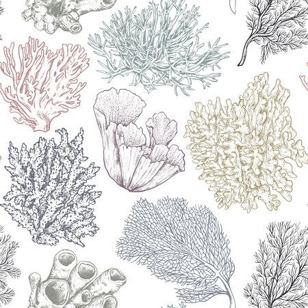 Vector seamless pattern with hand drawn ocean plants and coral reef elements in sketch style.