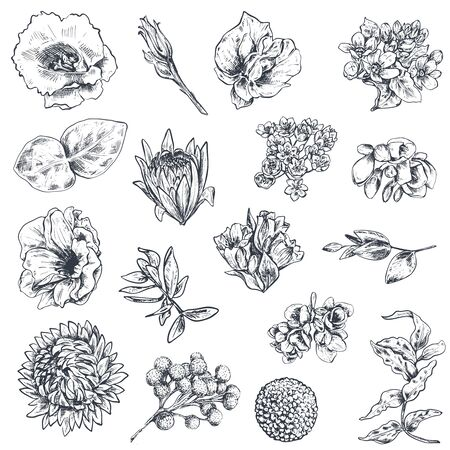 Collection of hand drawn flowers and plants. Monochrome vector illustrations in sketch style for wedding romantic design.