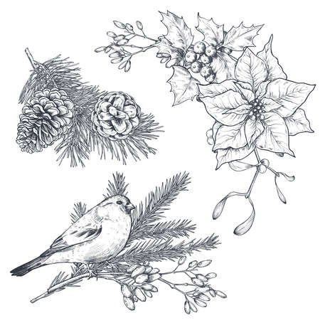 Vector Christmas floral arrangements for greeting card or invitation with hand drawn winter plants, pine cones, flowers, bird.
