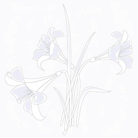 stamen:  illustration of lilies