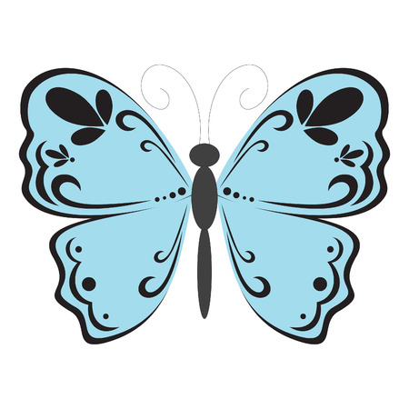 butterfly isolated:   blue butterfly