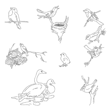 bird nightingale: Digital hand drawn stamps Illustration