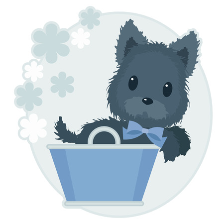 Scotch terrier with blue bow in a blue basket on floral background.