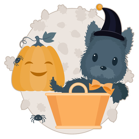 Halloween vector illustration. Scotch terrier with orange bow and witch hat in orange basket. Happy smiling pumpkin with spiders. Illustration