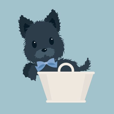 Scotch terrier with blue bow in a white basket on blue background