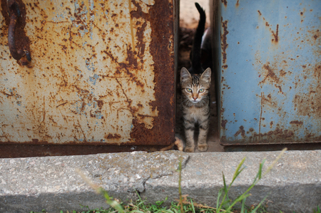 green eyes: problemlittle tabby kitten with green eyes in rusty dumpsters Stock Photo