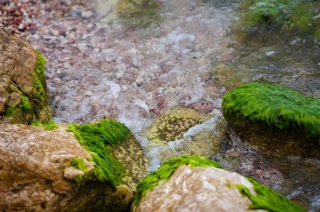 amanecer: Wet mar cubierto de piedras verdes de algas  Foto de archivo