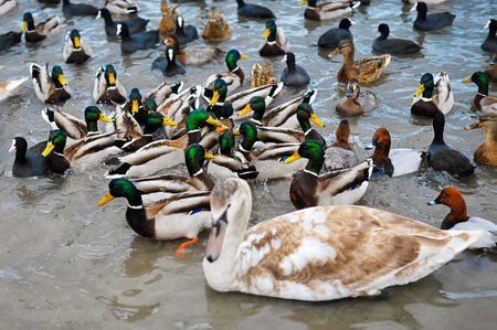 different kinds of ducks on the beach Stock Photo