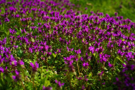 Nature Colorful Natural Blurred Background. Bokeh, Boke Wild Flowers With Sunlight Colors Absract Background Stock Photo