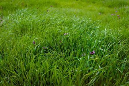 carpet clean: green blur background with grass foreground.