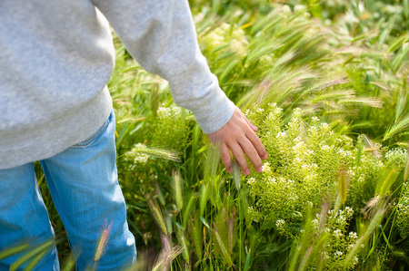 Hand on the Grass in Beautiful day, Relax Day, Relax Hand on the Grass, Hand with Sunny Day