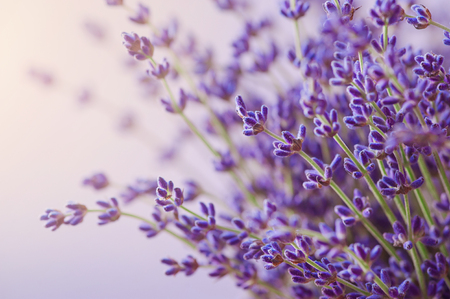 fragrant: Branches of flowering lavender. Can be used as background