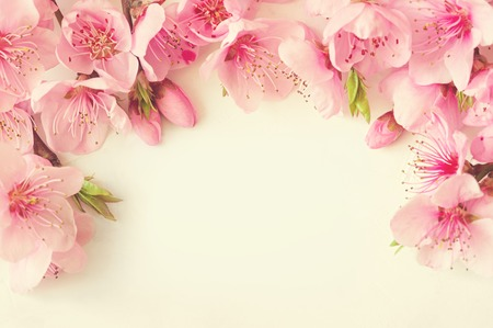 Frame of pink flowers, branches, leaves and lilac petals on white background. Flat lay, top view