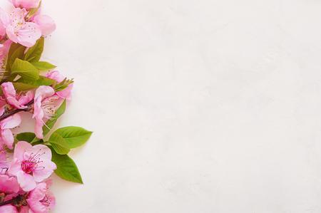 Pink spring background fresh flower on white background.