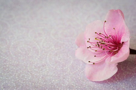 Summer blossoming flowers peach tree, toned, light and heart bokeh background, pastel and soft flower card Stockfoto