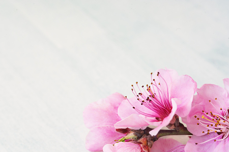 Spring blossom or summer blossoming peach, toned, bokeh flower background, pastel and soft floral card Stockfoto