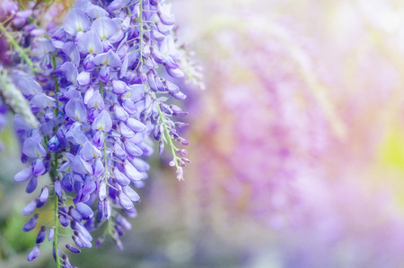 beautiful flowers made with color filters. abstract nature spring Background Stockfoto