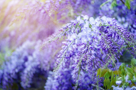 Beautiful flower background wallpaper made with color filters effect. Stockfoto