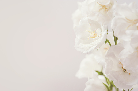 Abstract spring seasonal background with white flowers, natural easter floral image with copy space Stockfoto