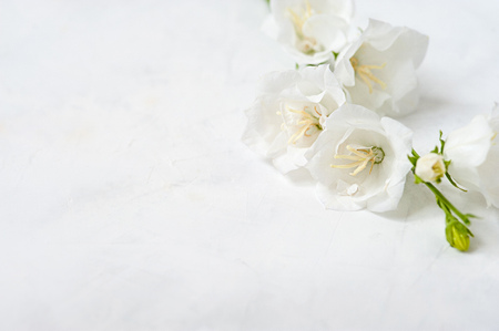 White flower on a white background. White flower close-up wedding abstract background Stockfoto