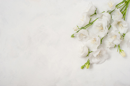 Platycodon grandiflorus flowers isolated on white background Stockfoto