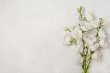Beautiful white flowers campanula on white background Stockfoto