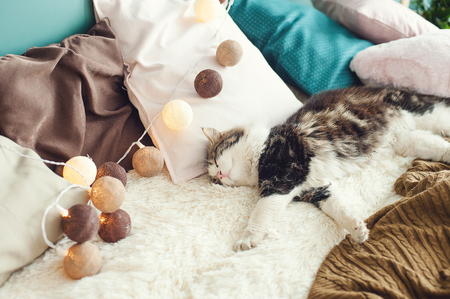 the cat sleeps sweetly on the bed. relax