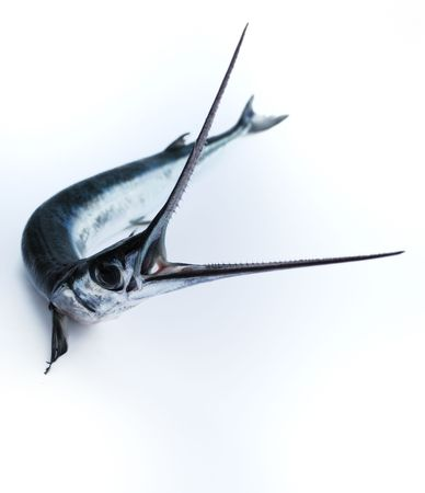 predatory: Head with teeth of fish-saw on white background  dangerous, eye, fin, fish-saw, head, mouth, predatory, sharp, silvery, teeth Stock Photo