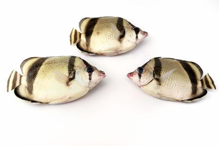 big clown fish: Three tropical fishes on white background