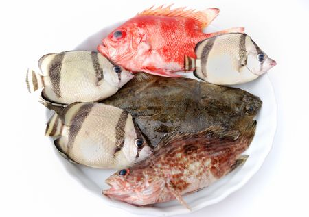 big clown fish: Set of tropical fishes on white plate on white background