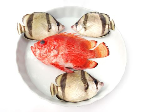 Set of tropical fishes on white plate on white background photo