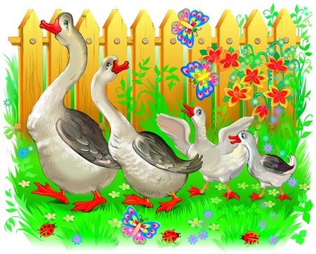 for example: Illustration of family of geese going for a walk. Image drawing on computer by graphic tablet.