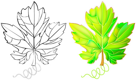grape leaf: Colorful and black and white pattern grape leaf, vector cartoon image.