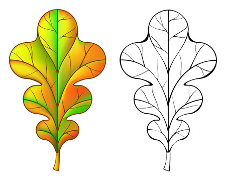 patrón de la hoja de roble colorido y blanco y negro, imagen de la historieta del vector.