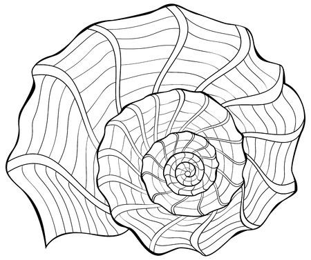 Illustrazione in bianco e nero di una shell per la colorazione. Foglio di lavoro per bambini e adulti. Immagine vettoriale Archivio Fotografico - 86999819