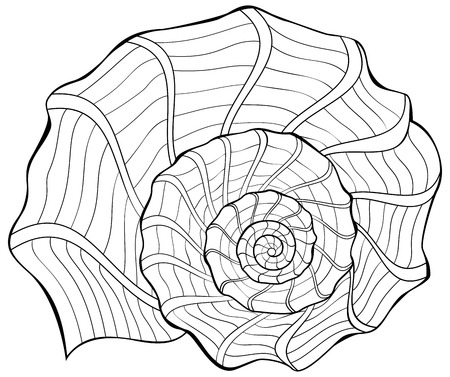 Black and white illustration of a shell for coloring. Worksheet for children and adults. Vector image.