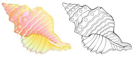 Modèle coloré et noir et blanc de coquille de mer.
